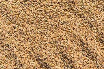 Background of natural rice from the island of Bali