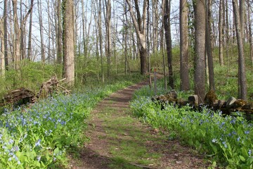 The dirt hiking trail though the green grass and flowers.