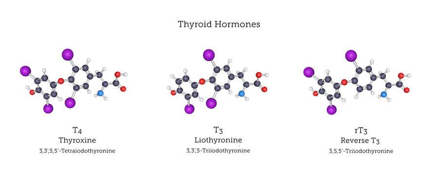 Molecular Structures of the Thyroid Hormones