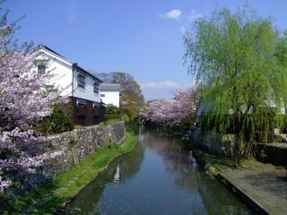 sakura landscape oumihachiman shiga japan