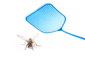 blue flyswatter attacking  a fly isolated on a white background, copy space