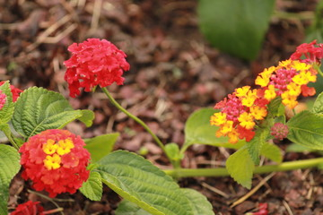 Small red and yellow flowers