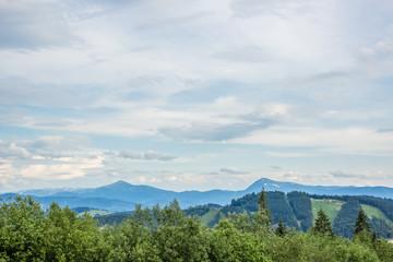 forest nature mountain landscape