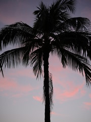 Palm tree silhouette on a pink sunset sky