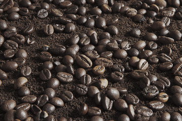 Coffee beans on coffee powder