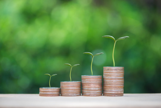 Plant growing up on the growing coin stack with nature background for business and finance concept