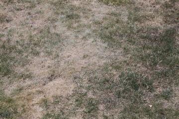 Vertrocknetes Gras