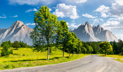 row of trees along the road in to the mountains. composite mountainous landscape with rocky peaks in the distance. beautiful summer nature with gorgeous sky. travel and explore unknown places concept