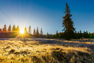 sunrise in the forests of Apuseni Natural Park. gorgeous autumn scenery among the spruce trees on the grassy meadow in dew. beautiful landscape in mountains of Romania