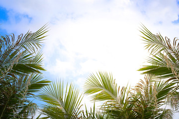 Coconut Palm tree with blue sky, retro and vintage tone.