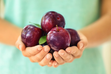 Woman holding ripe juicy plums, closeup