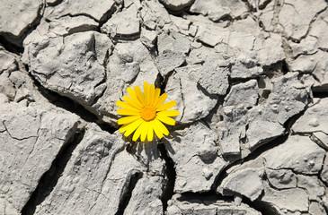 flor amarilla sobre suelo seco 4M0A0953-f18