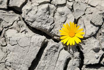 flor amarilla sobre suelo seco 4M0A0956-f18