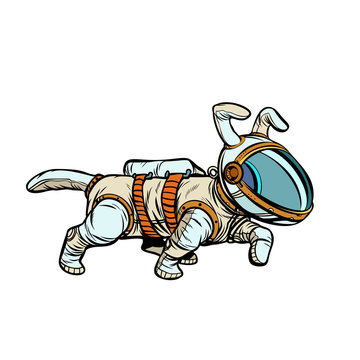 pet dog astronaut