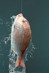 つり上げられた魚の水しぶき