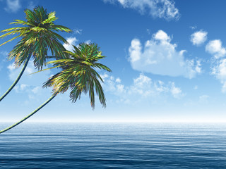 Two palms at sea coast