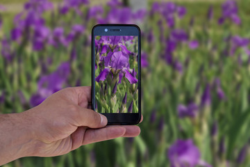 a man uses a smartphone to take a photo of flowers