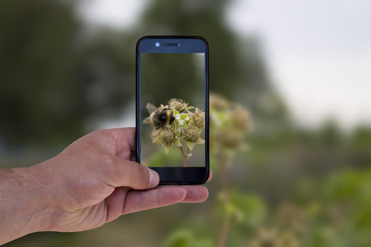man takes a photo of a bumblebee on a smartphone