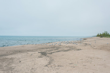 A lot of  seagulls on the beach of Lake Michigan. Space for text