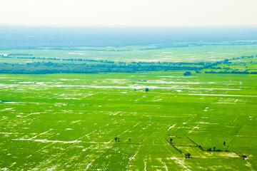 Beatiful green rice fields near Phnom Krom Village, Siem Reap, Cambodia