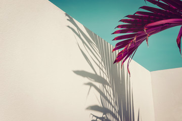 Purple palm leaves against turquoise sky and white wall