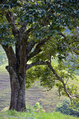 Closeup of leafy tree
