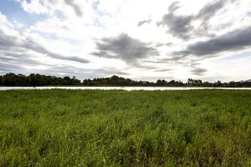 River bank on the horizon