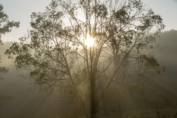 Rays of sun at dawn through of tree