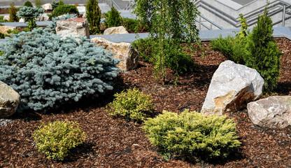 Landscape design. Bushes, rocks. Dwarf spruce. Flowers. Decorative element. Interior decoration.
