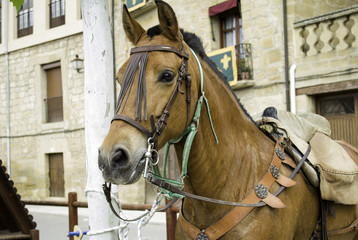 Horse with riding straps