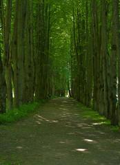 the dark avenue in sunny day