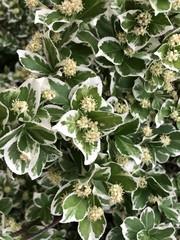 Green-white bush flowers 4 (series 1.)