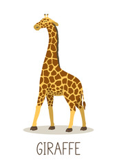 Cute giraffe with lettering on white background. Vector illustration.