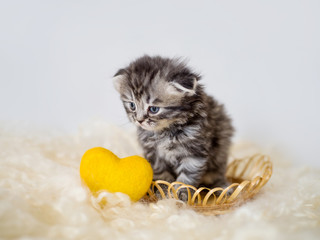 Pedigree lop-eared kitten in a basket next to a yellow decorative heart