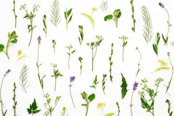 Herbal botanical background
