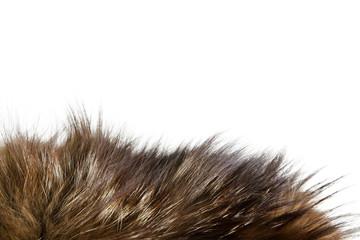Fur texture. Silver fox fur. Wall mural