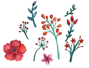 Hand drawn watercolor spring and summer flowers graphic elements and design