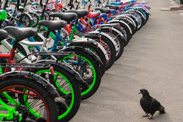 Parking of brand new bicycles on the asphalt and surprised pigeon