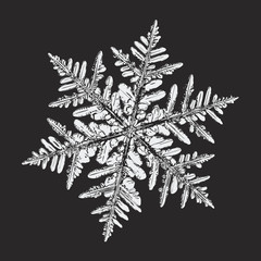 White snowflake on black background. This vector illustration based on macro photo of real snow crystal: large stellar dendrite with fine hexagonal symmetry, complex, elegant shape and ornate arms.