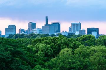 東京 夕方の日比谷公園と都心のビル群