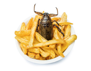 Offer of fast food with edible insects. A fried cockroach with french fries in cup.