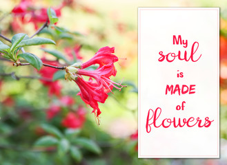"""Floral card with beautiful rhododendron flowers. Inspirational quote """"My soul is made of flowers""""."""