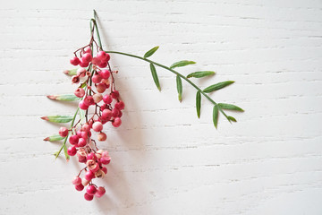 Fresh pink peppercorns with leaves Wall mural