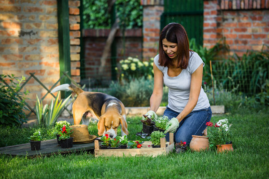 mid age woman with her dog doing some gardening in backyard