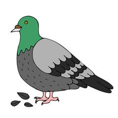 pigeon cartoon isolated