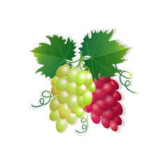 grapes on white background, healthy lifestyle or diet concept, logo for fresh fruits vector illustration