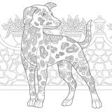 Rough Collie Dog Shetland Sheepdog Or Sheltie Coloring Page