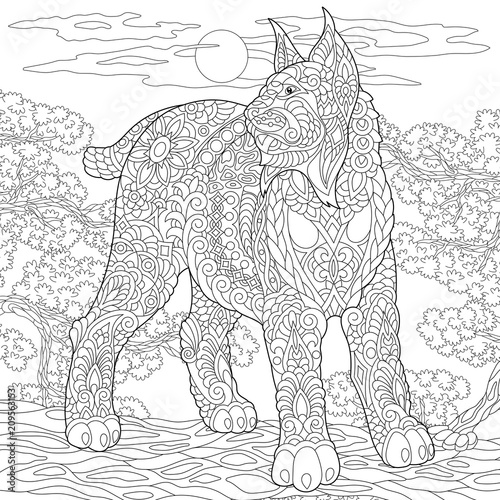 Wildcat Lynx Bobcat Coloring Page Colouring Picture Adult