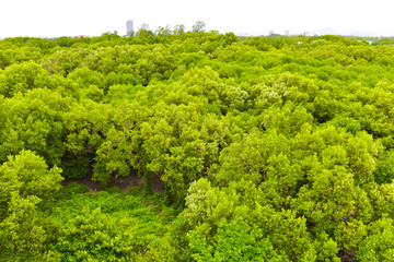 mangrove forest view in the Rayong bay Thailand