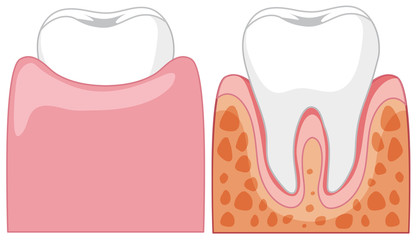 A Cartoon of Human Teeth